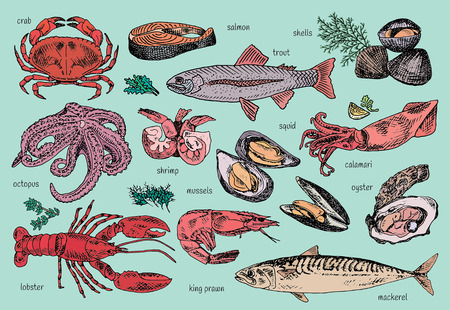 seafood menu vector illustration: octopus, mussels, lobster, trout, shells, mackerel, crab, oyster, king prawns, shrimps, squid, salmon, calamari Illustration