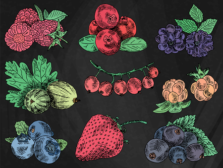 different types of berries menu vector illustration: berries garden, blackberries, blackberry, boysenberry, currants, dewberry, gooseberries, mulberry, raspberry, strawberry, mountain ash, blueberry, cloud berry Ilustrace