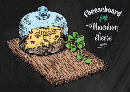 hand drawing illustration of chopping board with grapes and cheese. Cheese board on the chalkboard background
