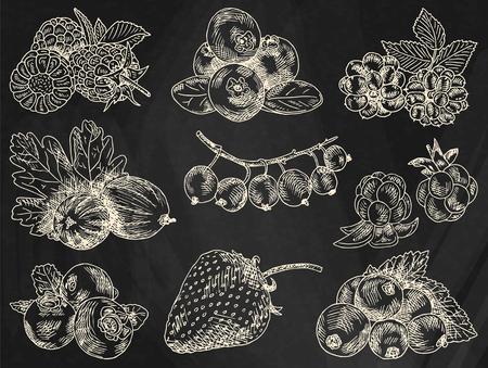 berries garden, blackberries, blackberry, boysenberry, currants, dewberry, gooseberries, mulberry, raspberry, strawberry, mountain ash, blueberry, cloud berryon the chalkboard background Ilustrace