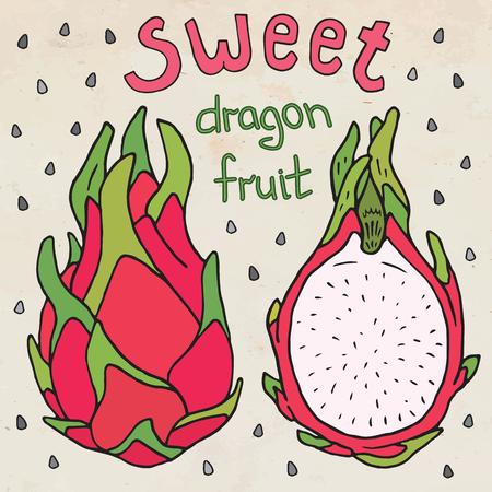 Sweet juicy dragon fruit. Summer exotic food. Beautiful hand drawn illustration of fruits. Ilustrace