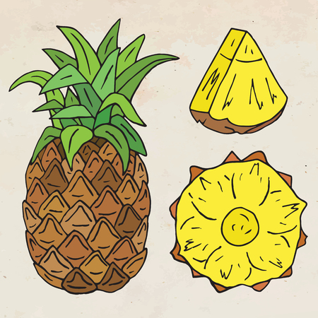 Sweet juicy Pineapple. Summer exotic food. Beautiful hand drawn illustration of fruits.