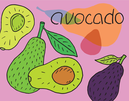 Sweet juicy avocado. Summer exotic food. Beautiful hand drawn illustration of fruits