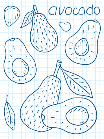 Sweet juicy avocado. Summer exotic food. Beautiful hand drawn illustration of fruits Reklamní fotografie - 104267641