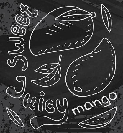 Sweet juicy mango. Summer exotic food. Beautiful hand drawn illustration of fruits on chalkboard background  イラスト・ベクター素材
