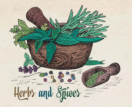 Bella mano disegno mortaio di erbe e spezie sane. Erbe aromatiche, basilico, cerfoglio. Vettoriali