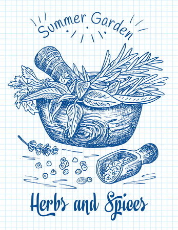 Beautiful hand drawing healthy herbs and spices mortar. Herbs, basil, chervil. Reklamní fotografie - 117686350