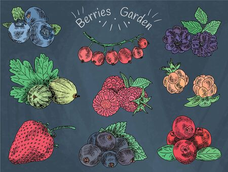 berries garden, blackberries, blackberry, boysenberry, currants, dewberry, gooseberries, mulberry, raspberry, strawberry, mountain ash, blueberry, cloud berryon the chalkboard background Vectores