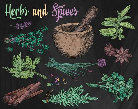 Beautiful hand drawing healthy herbs and spices mortar. Herbs, basil, chervil.