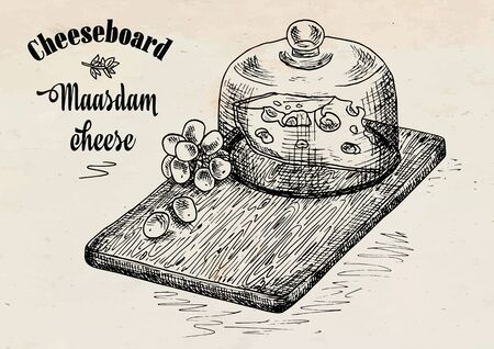 hand drawing illustration of chopping board with grapes and cheese. Cheese board.