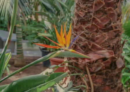 nat: Beautiful bird of Paradise flower