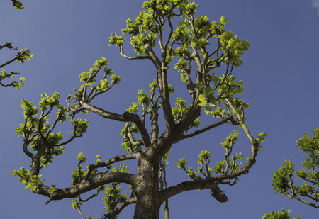 Upper branches of tree photo