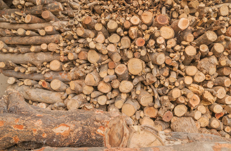 rural india: Heap of freshly cut firewood used as fuel in rural India Stock Photo