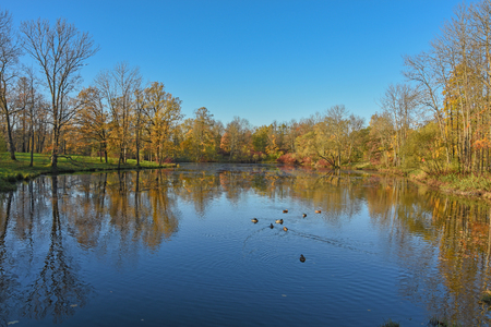 Gold autumn; trees near pond