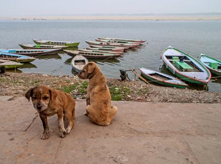 sailing boats: Puppies near Holy Ghats of Varanasi