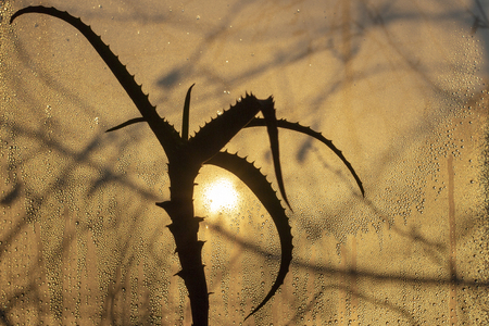 sunset through misted glass, in the foreground an aloe flower, it is raining outside Stock fotó