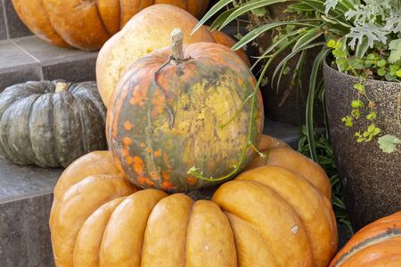 Pumpkins in farmers market. Different varieties of squashes. Orange Pumpkin Haystack Thanksgiving festival