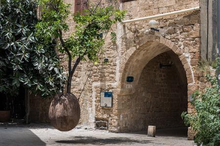 yaffo: Hanging tree in old Jaffa Foto de archivo