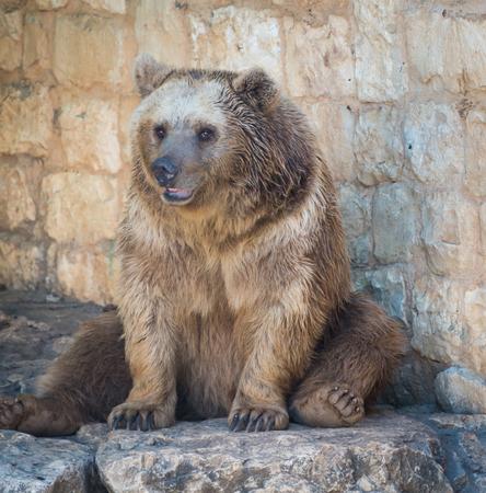 haifa: Haifa Zoo, Israel