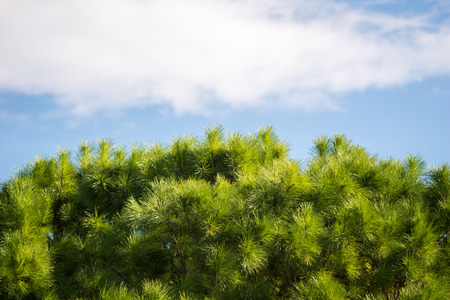ein: Trees at Ein Afec Reserve Stock Photo