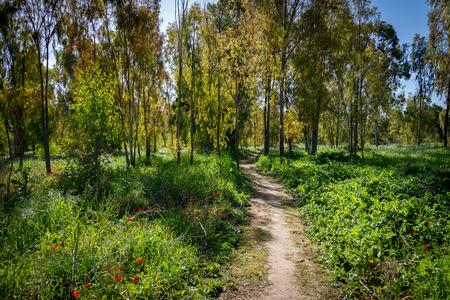 Darom Adom festival, Shokeda Forest 2016
