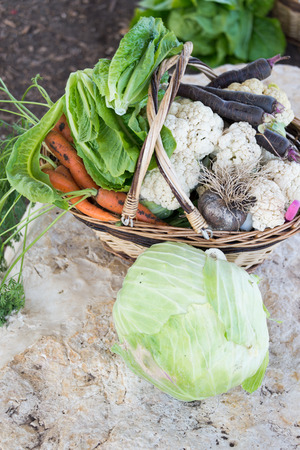 galilee: Basket full with fruits and vegetables at Bethlehem of Galilee