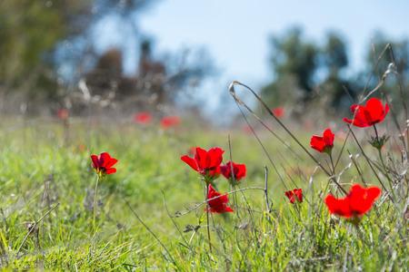 Visit to Eshkol National Park (HaBsor National Park) Banco de Imagens