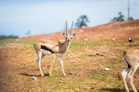 Morning Tour at Safari Ramat Gan in Israel