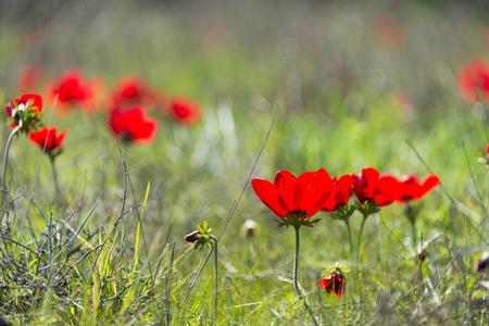 Visit to Eshkol National Park (HaBsor National Park) Imagens