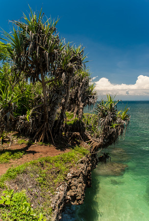 Fading tropical trees and cactuses standing on the edge of the cliff that is overhung above the turquoise water of the Indian ocean.