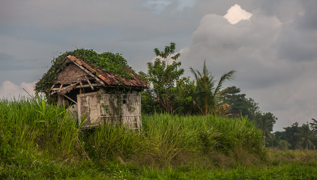 falling apart: Ruined old hut, standing on the edge of a cascade terrace. Surrounded by the fields. Abandoned and falling apart and verdurous. The hunt is on the left side of the image.