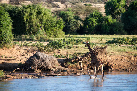 orte: giraffe in the wild of africa Stock Photo