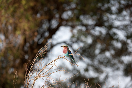 wilds: bird in the wilds of africa