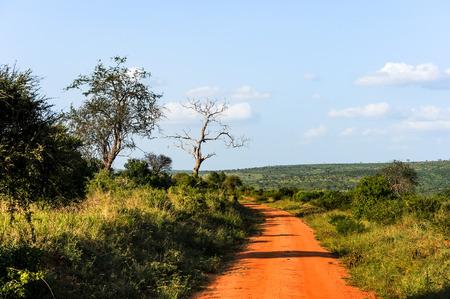 savannah: Safari in Africa in the savannah kenya Stock Photo