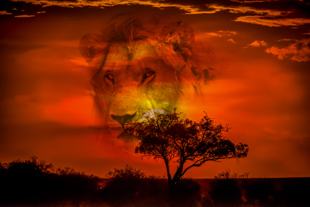 Lion in the savannah of Africa Reklamní fotografie