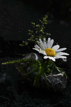 tender spring messengers in the Mostviertel