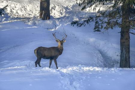 deer hiking in Mostviertel Alps Austria