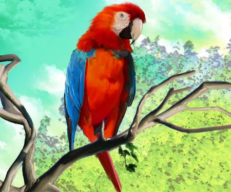 macaw: macaw isolated Stock Photo