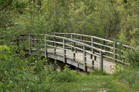 Old Wooden Bridge through Heavy Forested Path Stock Photo