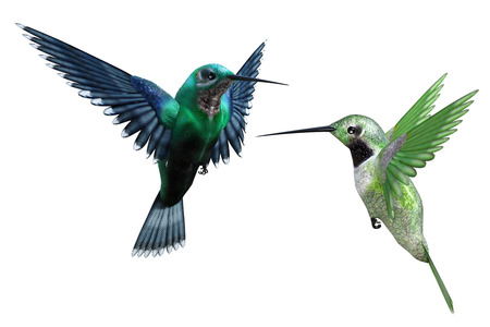 Humming birds isolated on white, 3d render