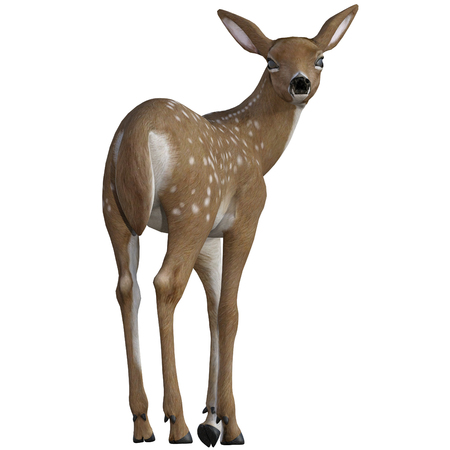 Red baby deer  fawn isolated on white, 3d render. Stock Photo