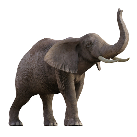 Grey Elephant isolated on white, 3d render.