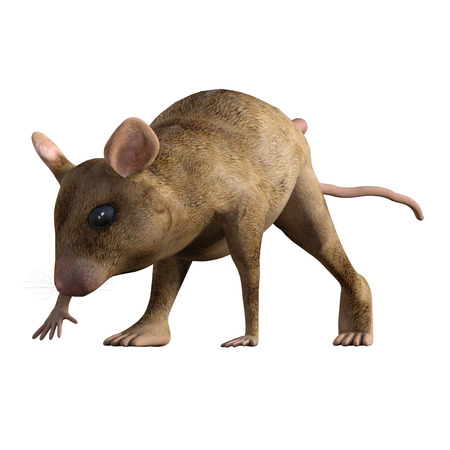 Cute cartoon house mouse isolated on white, 3d render. Standard-Bild - 98683834