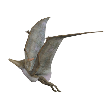 Pteranodon isolated on white, 3d render