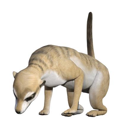 Meerkat isolated on white, 3d render