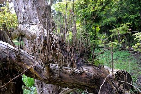 Twiggy trunk