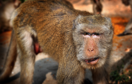 nearly: Thailand monkey live in big group nearly people