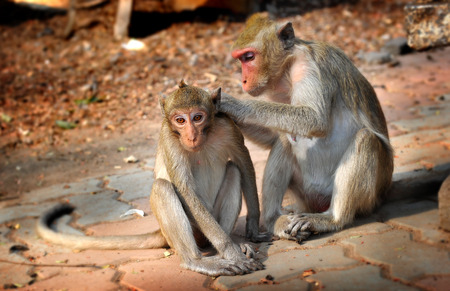 animal photo: Thailand monkey live in big group nearly people