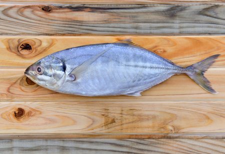 fishery: fresh indian mackerel fish for cooking from asian fishery market