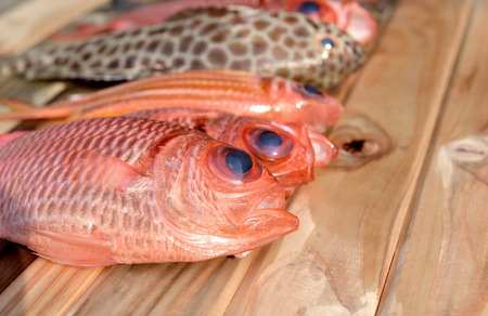 aring: fresh Pinecone soldierfish for cooking from asian fishery market photo in daylight time show big eyes and pink scales